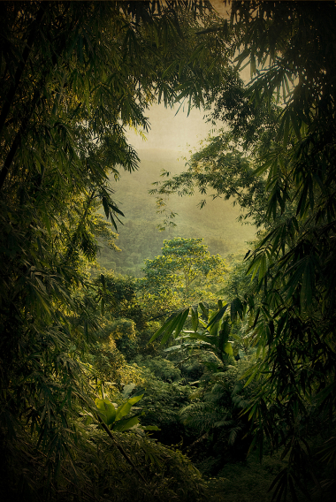 La route de la jungle